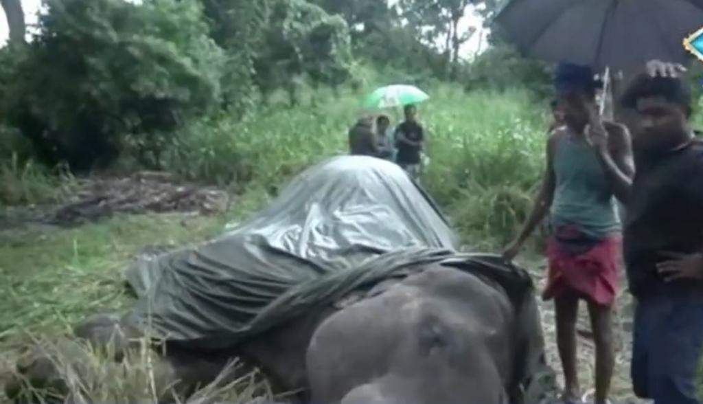 Elefante cai e morre de exaustão no Sri Lanka