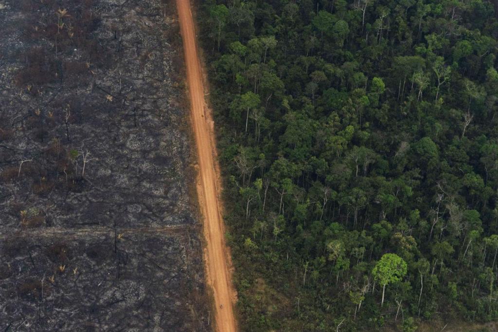 Contraste na floresta da Amazónia, entre o que foi destruído pelos incêndios e a beleza do território, cuja ameaça fez temer pelo futuro da Humanidade