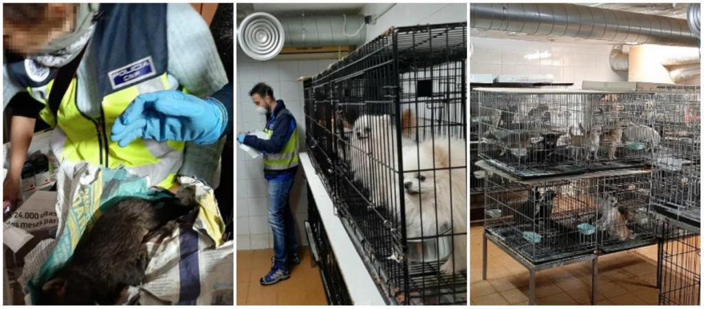 Polícia espanhola resgata 270 cães de rede de tráfico ilegal