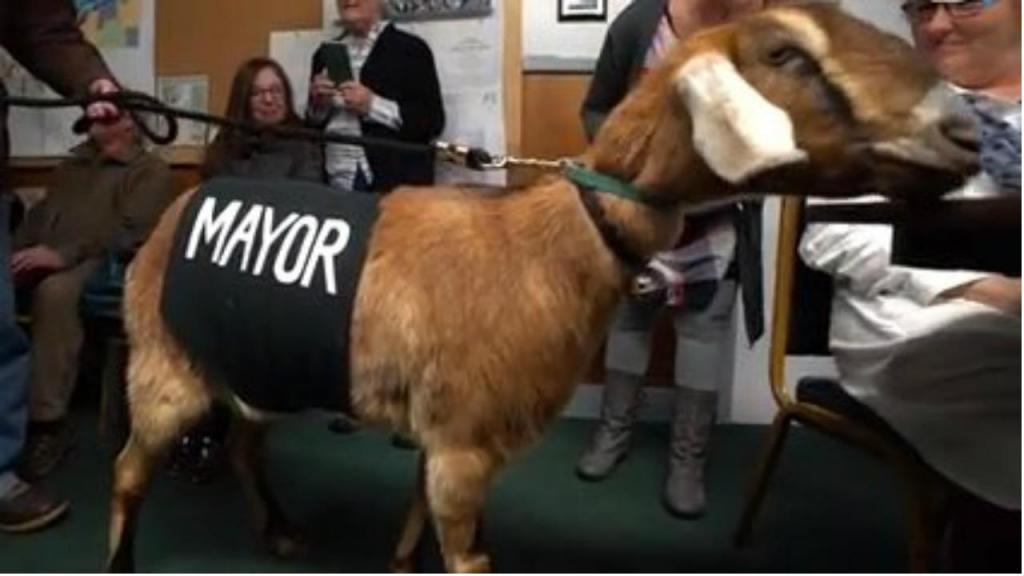 Uma cabra e dois cães concorrem à presidência de Fair Heaven