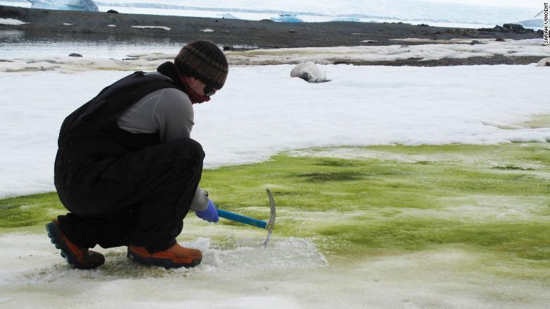Neve está a ficar verde na Antártida
