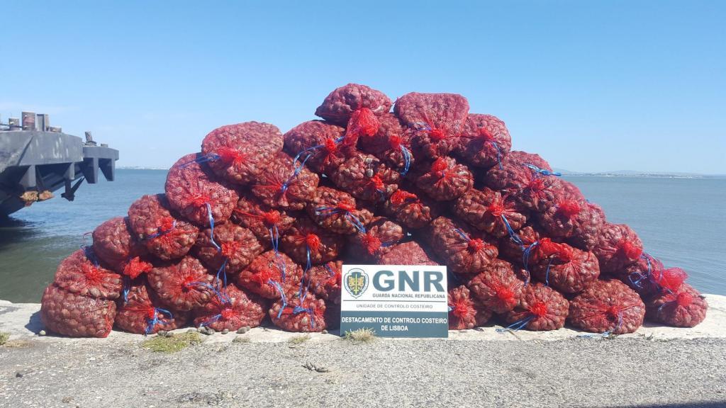Mais de 850 quilos de amêijoa-japonesa apreendidos na zona do Parque das Nações