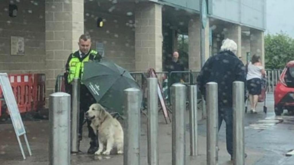 Segurança cede guarda-chuva para proteger cão à chuva