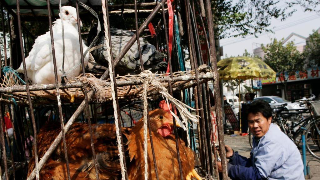 Mercado de aves na China