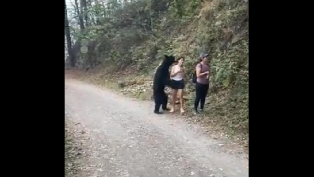 Urso preto surpreende mulher em parque