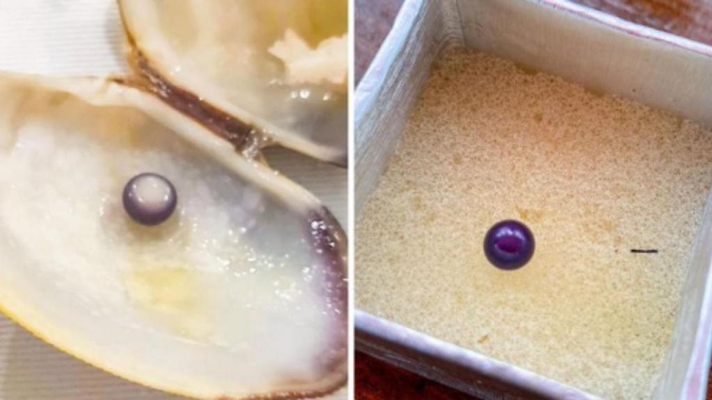Casal encontra pérola rara em prato de amêijoas