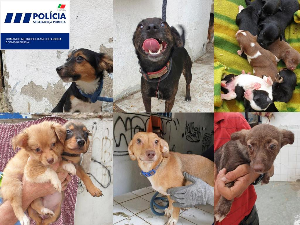 PSP retira 28 cães