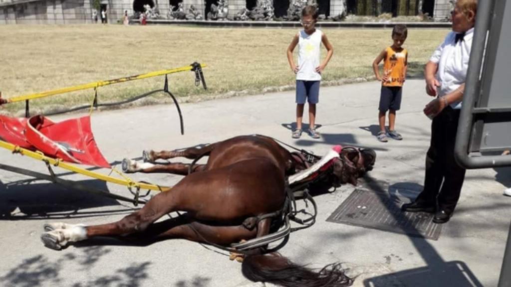 Cavalo morre vítima de golpe de calor enquanto puxava carroça com turistas