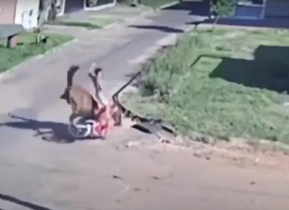Cavalo atropela motociclista (reprodução YouTube)