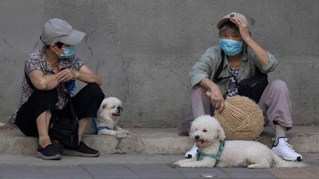 Passeios com cães na China