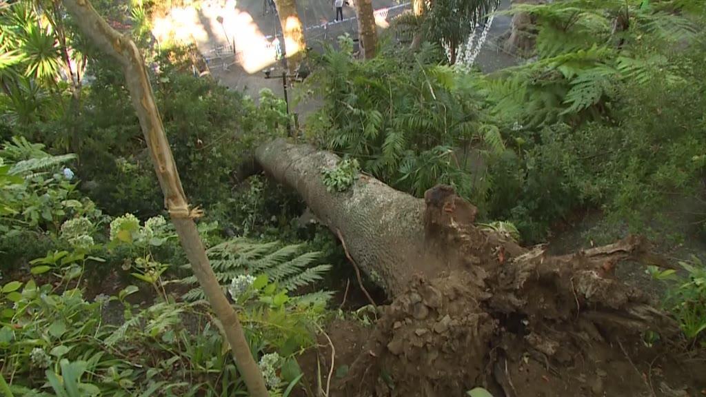 Queda de árvore: vice-presidente e chefe da divisão de jardins da CM do Funchal acusados por homicídio