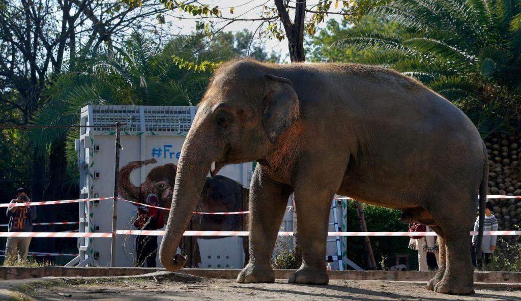 Kaavan, o elefante mais solitário do mundo, abandona o Paquistão