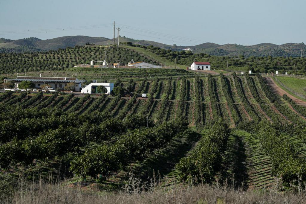 Falta de chuva preocupa agricultores algarvios