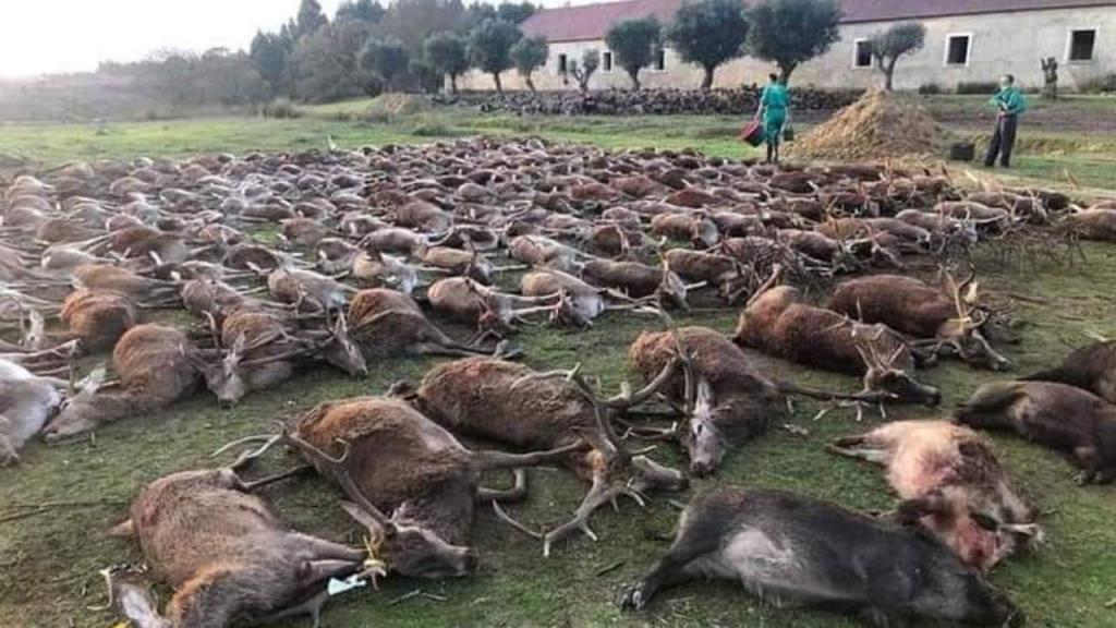 Mais de 500 animais mortos em montaria na Azambuja