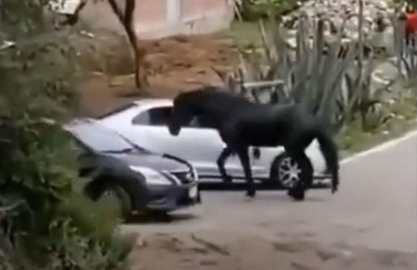 Cavalo bate em carro (reprodução YouTube)