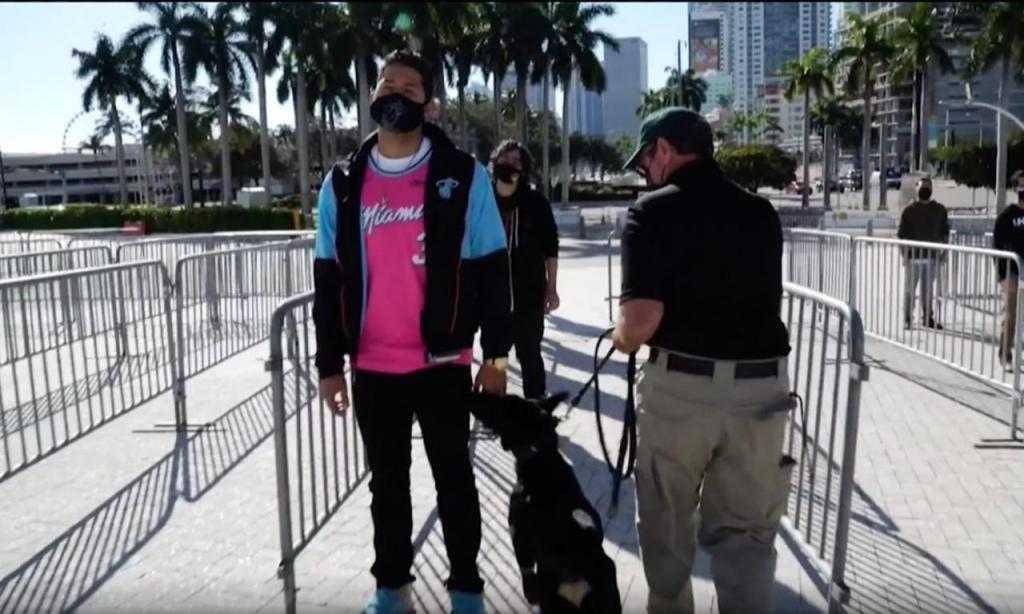 Miami Heat aposta em cães para detetar casos de covid-19