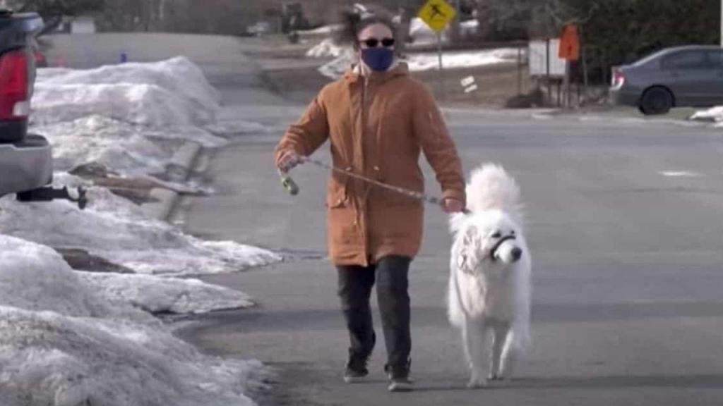 Cadela salva a dona no Canadá
