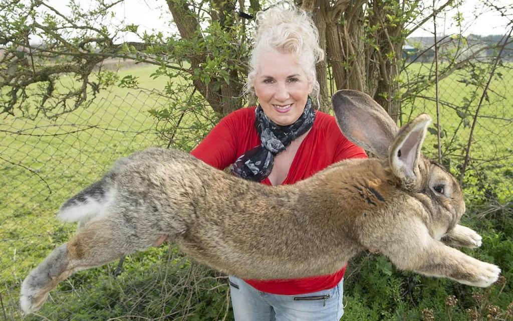 Maior coelho do mundo