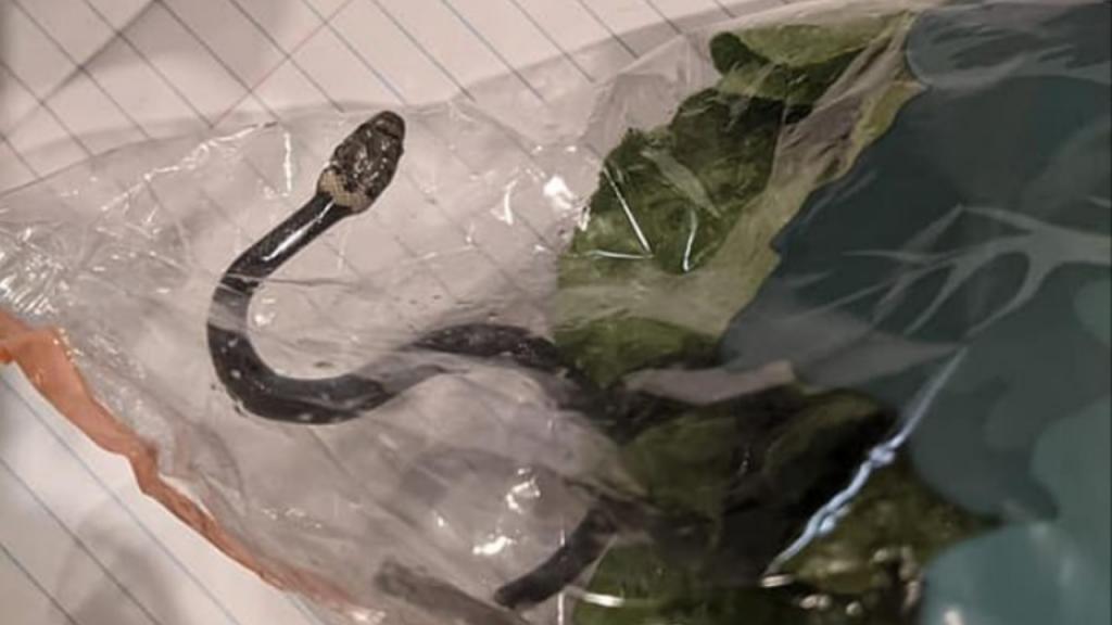 Cobra encontrada dentro de um saco de alface do supermercado