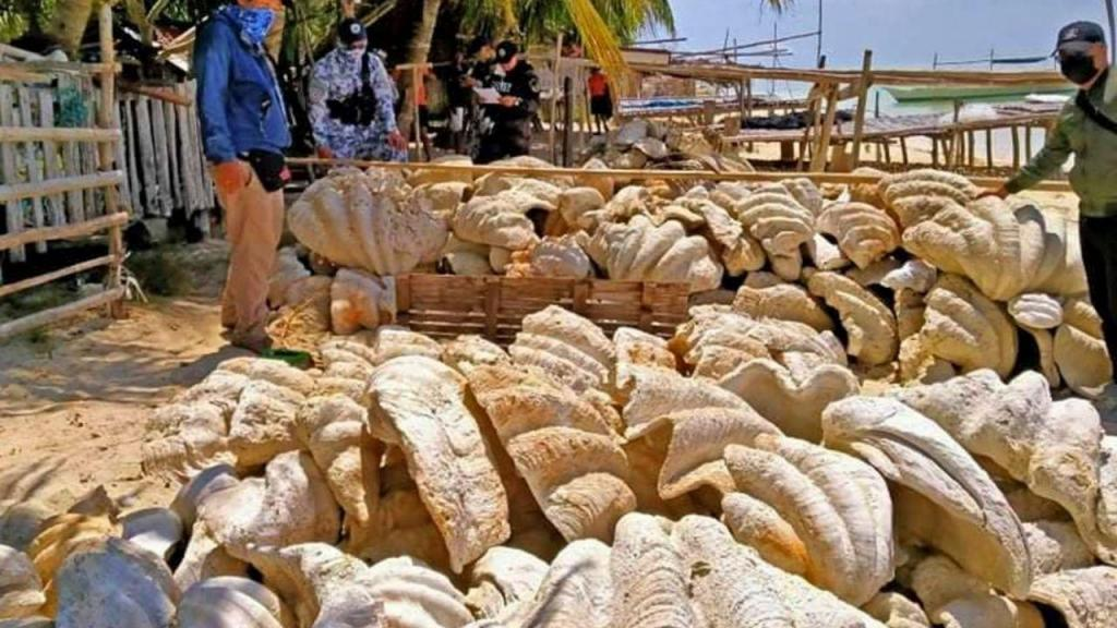 Conchas gigantes nas Filipinas