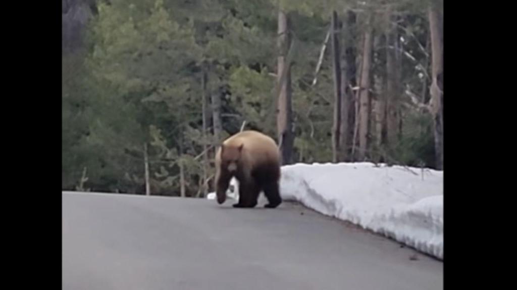 Homem dialoga com urso