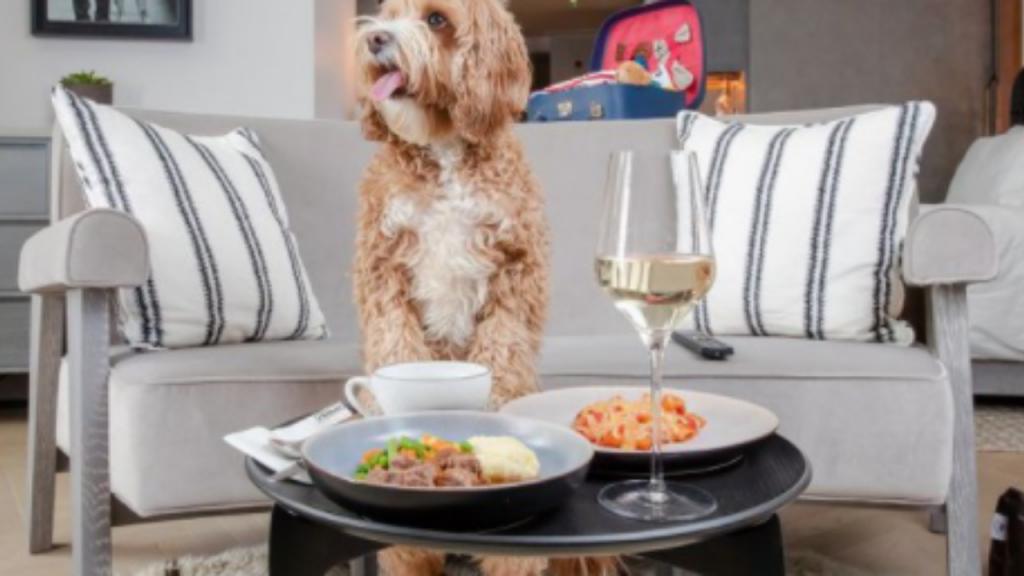 Rede de hotéis cria menu especial para cães