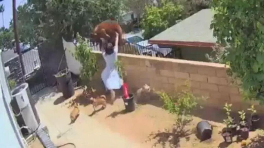 Mulher enfrenta urso