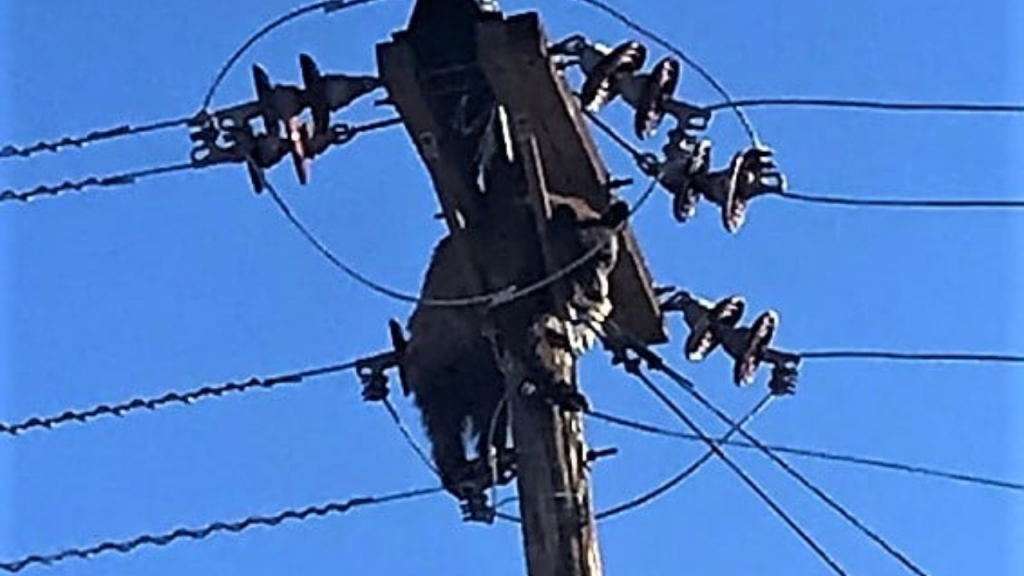 Urso preso em poste de eletricidade