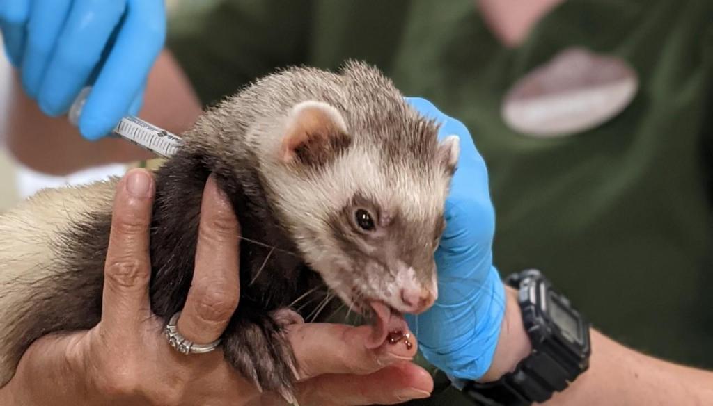 Animais do Zoo são vacinados contra a covid