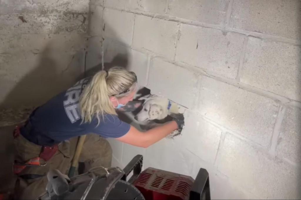 Cão resgatado de dentro de uma parede