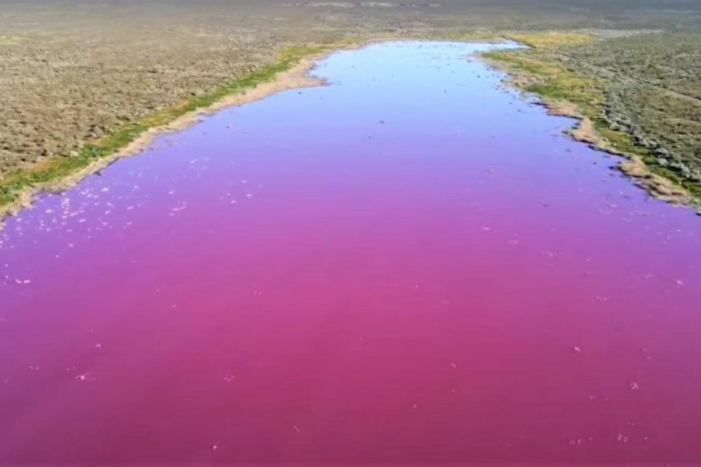 Lagoa na Patagónia fica cor-de-rosa devido à poluição