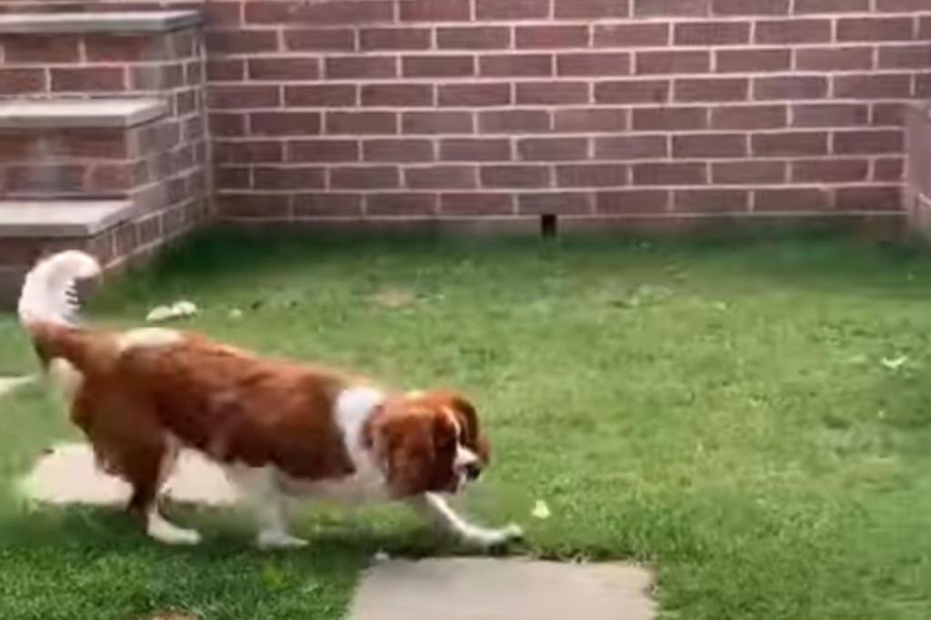 Cão come borboleta