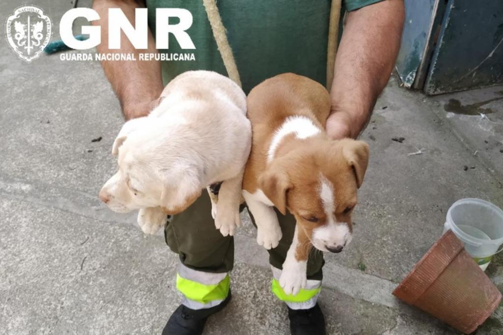 GNR de Braga resgata cães