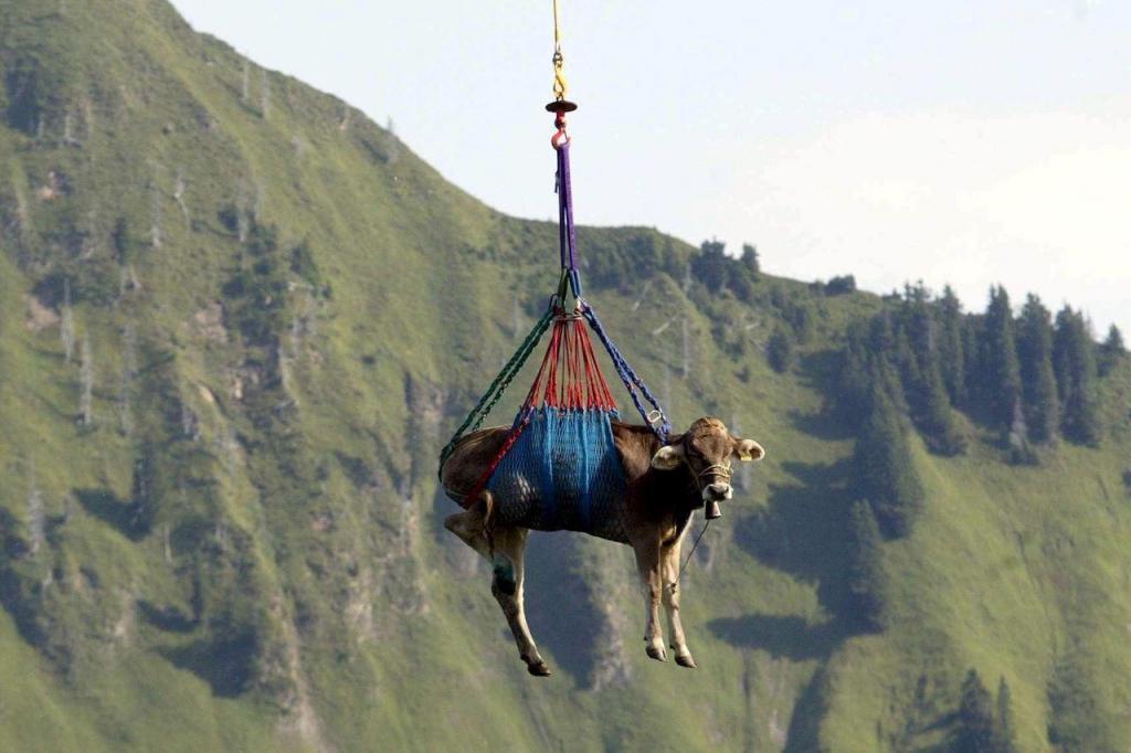 Vacas Alpes suiços