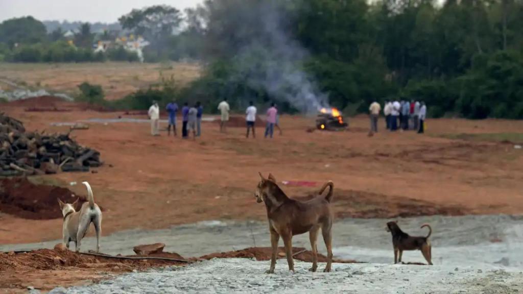 Vala comum de cães na Índia
