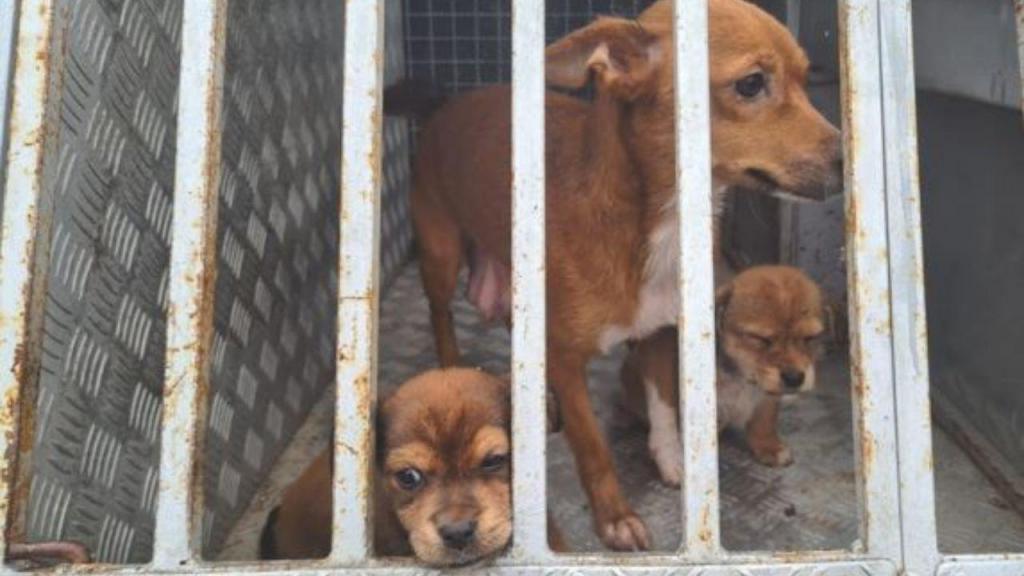 Cães resgatados - GNR