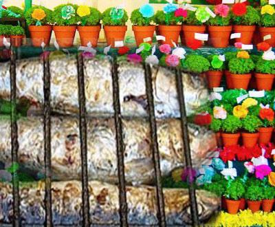 sardinhas e manjericos