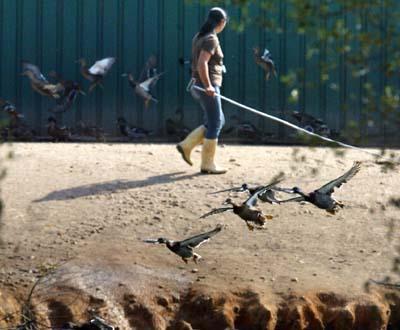 Gripe das Aves em Portugal - Foto Paulo Cunha/Lusa